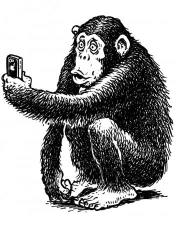 Contact-chimp